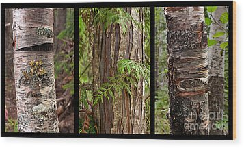 Wood Print featuring the photograph Tree Wear By Nature by Sandi Mikuse