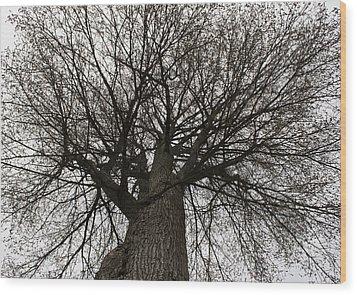 Tree Web Wood Print