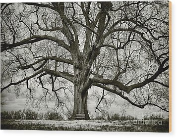 Tree With Bench Wood Print by Greg Ahrens