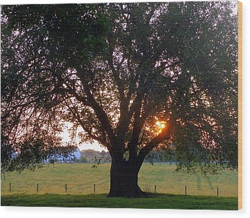 Tree With Fence. Wood Print by Joseph Skompski