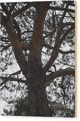 Tree4 Wood Print by Susan Townsend