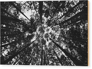 Wood Print featuring the photograph Trees Above Me by Daniel Woodrum
