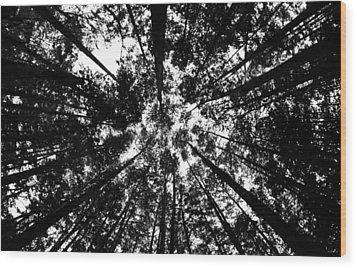 Trees Above Me Wood Print by Daniel Woodrum