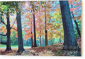 Trees Along The Lyman Estate Wood Print
