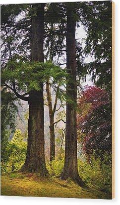 Trees In Autumn Glory. Scotland Wood Print by Jenny Rainbow
