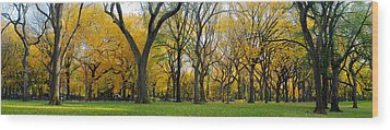 Wood Print featuring the photograph Trees In Central Park by Yue Wang