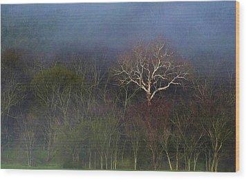 Trees In Fog 4 Wood Print by Dena Kidd