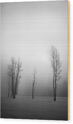 Trees In Mist Wood Print by Davorin Mance