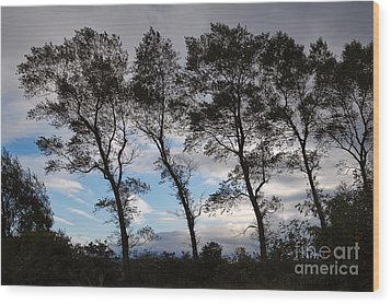 Trees Wood Print by Louise Heusinkveld