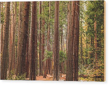 Trees Of Yosemite Wood Print by Muhie Kanawati
