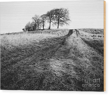 Trees On A Hill Wood Print by John Farnan