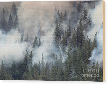 Beaver Fire Trees Swimming In Smoke Wood Print