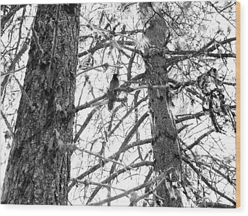 Wood Print featuring the photograph Trees by Tarey Potter