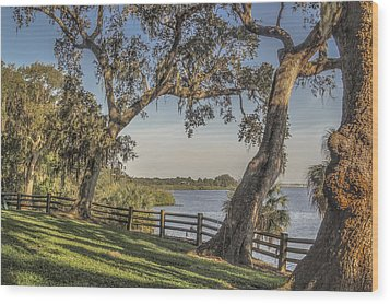 Wood Print featuring the photograph Trees With A View by Jane Luxton