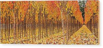 Treescape 2 Wood Print by Rebecca Cozart