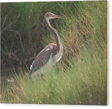 Wood Print featuring the photograph Tri-color Heron by Leticia Latocki