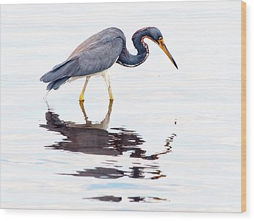 Tri-color Heron Wood Print by Phil Stone