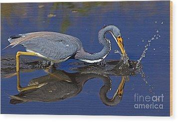 Tri Color Heron Splash Wood Print by Larry Nieland