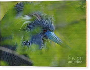 Wood Print featuring the photograph Tri-colored Heron Concealed    by John F Tsumas