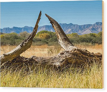 Wood Print featuring the photograph Triangle by Beverly Parks