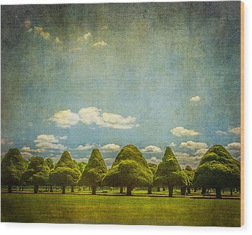 Triangular Trees 003 Wood Print by Lenny Carter