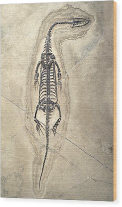 Triassic Aquatic Reptile Wood Print by Science Photo Library