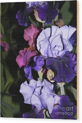 Tricolor Night Blossoms Wood Print