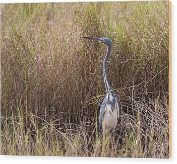 Wood Print featuring the photograph Tricolored Heron Peeping Over The Rushes by John M Bailey