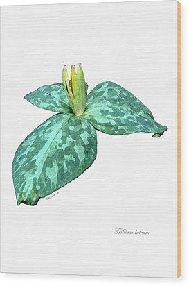 Trillium 3 Wood Print