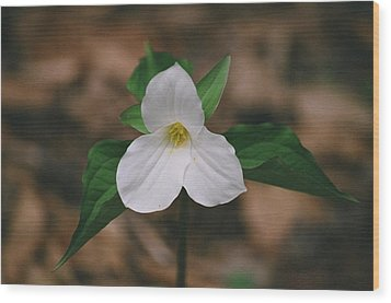 Wood Print featuring the photograph Trillium by David Porteus