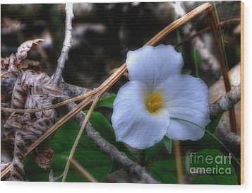 Wood Print featuring the photograph Trillium On County C by Trey Foerster