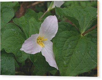Wood Print featuring the photograph Trillium Ovatum by Ken Dietz
