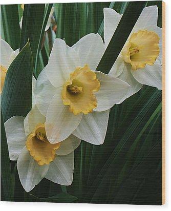 Trio Of Daffodils Wood Print by Bruce Bley
