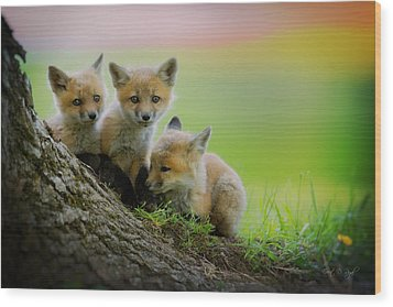 Trio Of Fox Kits Wood Print by Everet Regal