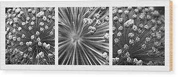 Triptych Allium Flower Wood Print by Alexander Senin