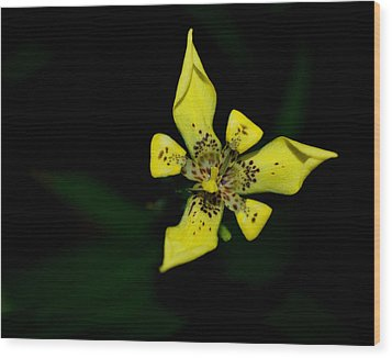 Wood Print featuring the photograph Tropic Yellow by Miguel Winterpacht