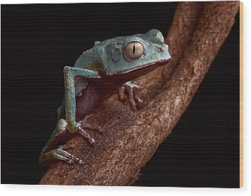 Tropical Amazon Rain Forest Tree Frog Wood Print by Dirk Ercken