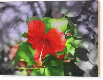 Tropical Burst Wood Print