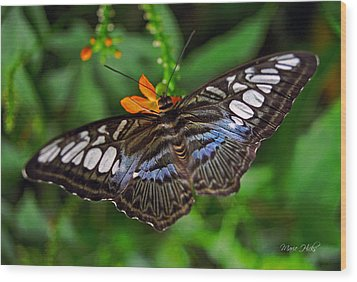 Wood Print featuring the photograph Tropical Butterfly by Marie Hicks