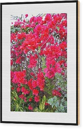 Tropical Flowers Of South Florida Wood Print by Dora Sofia Caputo Photographic Design and Fine Art