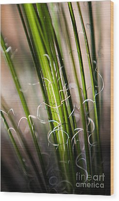 Tropical Grass Wood Print