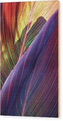 Tropical Leaf No. 2 Wood Print