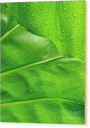Tropical Leaves Wood Print by Ranjini Kandasamy