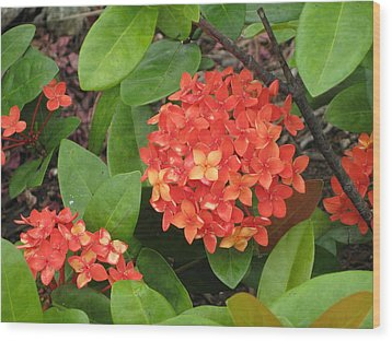 Wood Print featuring the photograph Tropical Orange Flower by Judy Palkimas