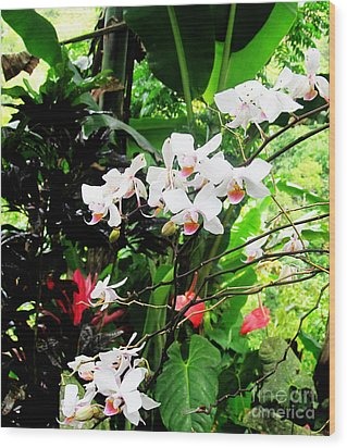 Tropical Orchids Wood Print by Tina M Wenger