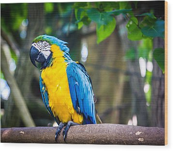 Tropical Parrot Wood Print