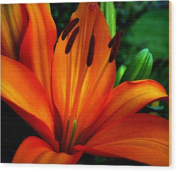 Tropical Passion Wood Print by Karen Wiles