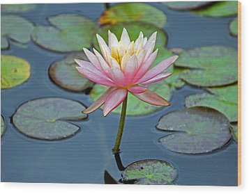Tropical Pink Lily Wood Print by Cynthia Guinn