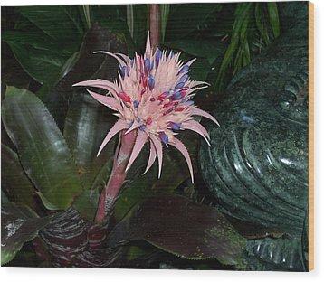 Tropical Thrill Wood Print by Sheila Silverstein