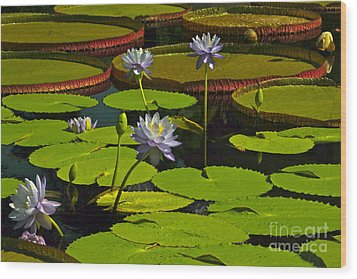 Tropical Water Lily Flowers And Pads Wood Print by Byron Varvarigos